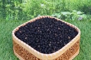 Бархат амурский сбор урожая